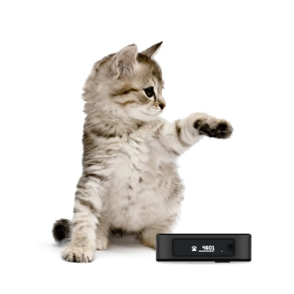 cat with activity monitor