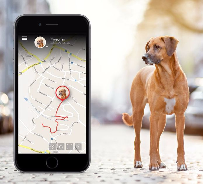 GPS pet tracker amazon India