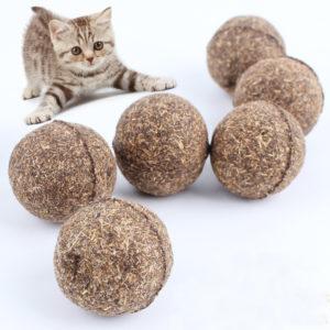 cat toys India