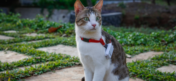 GPS tracking for cats in India