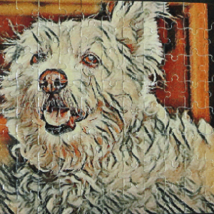 fluffy dog jigsaw puzzle