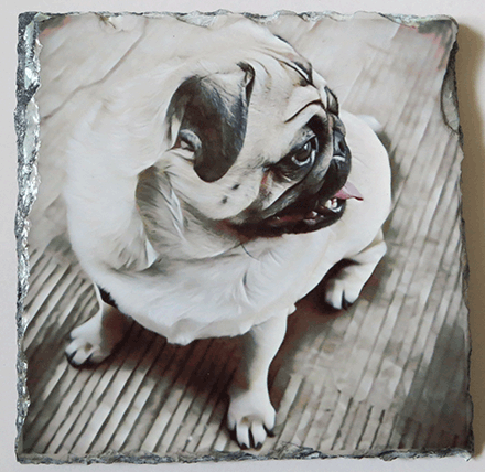 pug dog picture