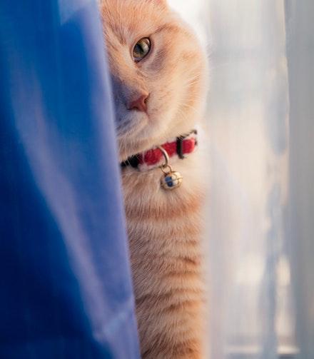 ginger cat photos