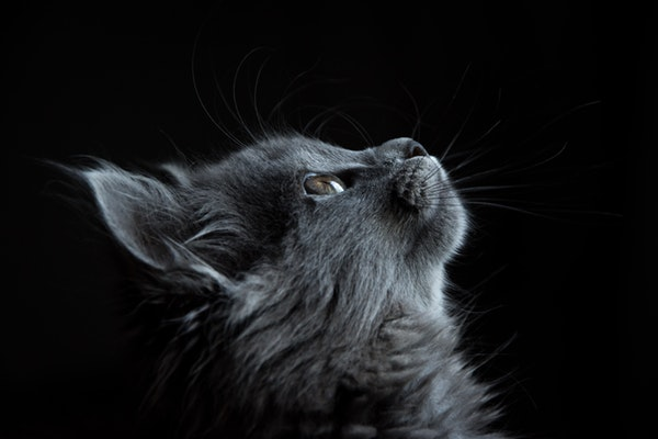 <img>Grey cat looking up at owner with grey eyes<img>&#8221; class=&#8221;wp-image-14070&#8243;/></figure></div>    <p></p> 									</div><!-- .entry-content --> 			 			 					</div> 	</div> </article><!-- #post -->     				<div class=