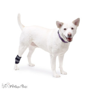 dog ankle wrap India