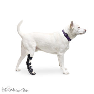 dog rear leg splint