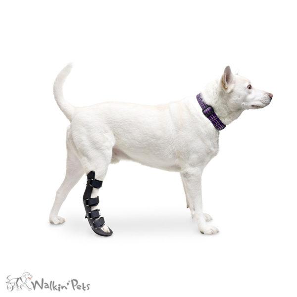 dog rear leg splint