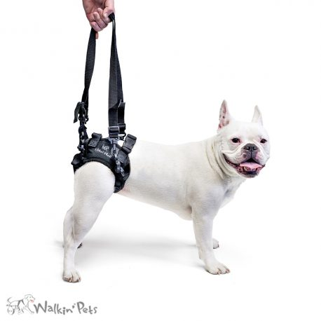 lift harness dog