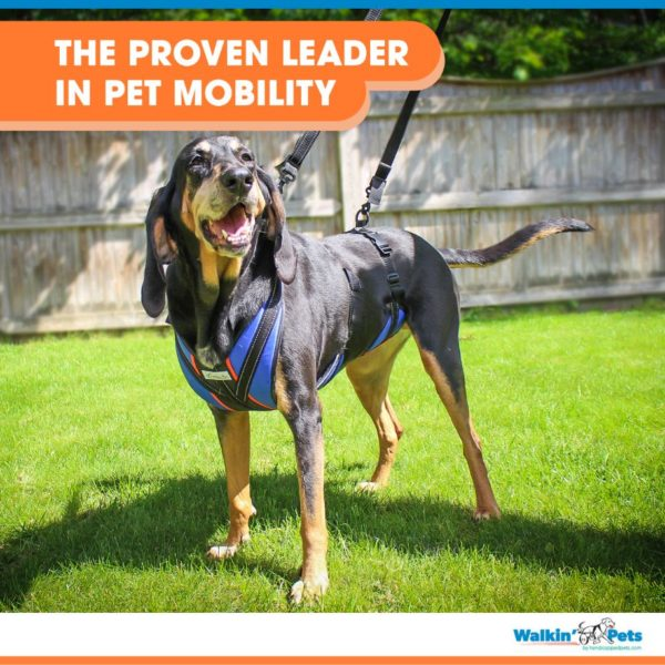pet mobility harness