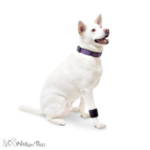 dog wrist carpal support