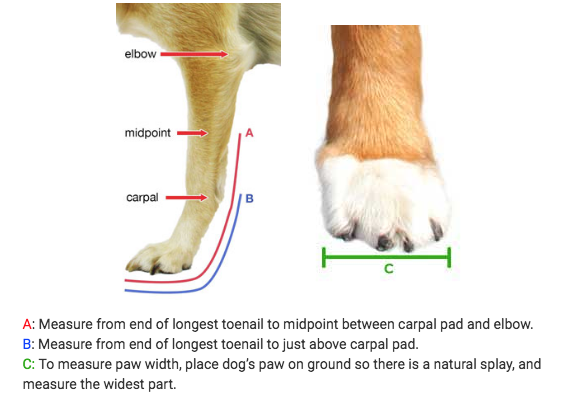 dog splint size