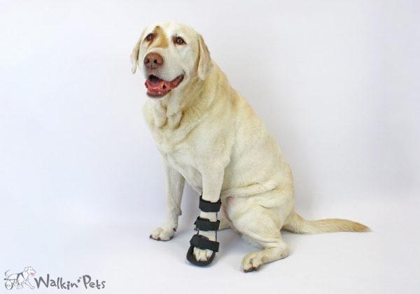 front leg splint for labradors