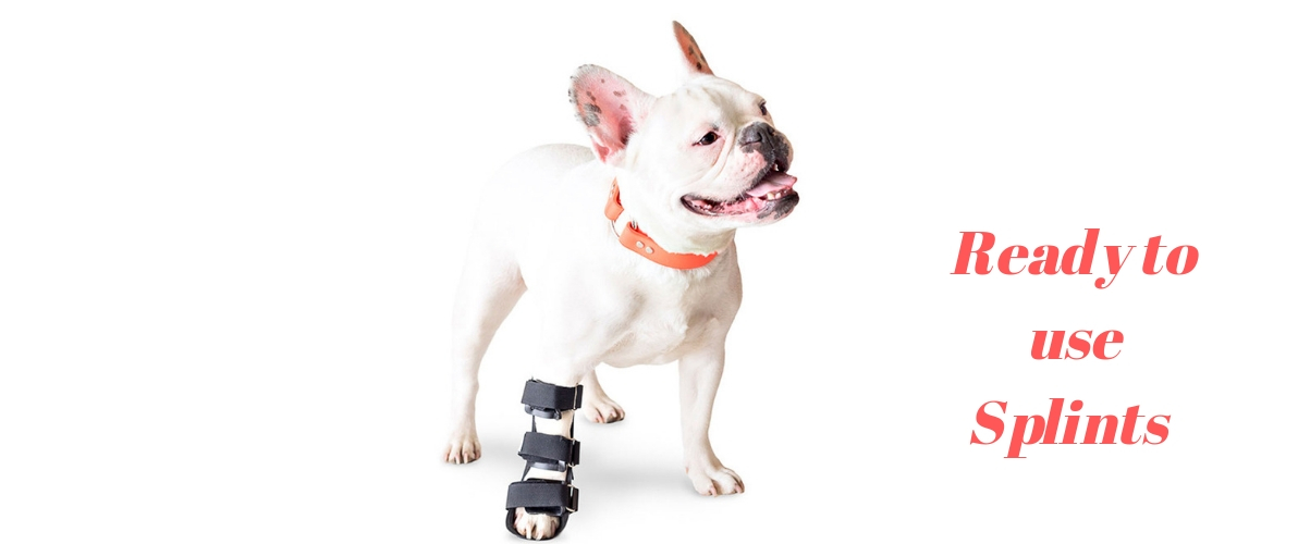bull dog with splint