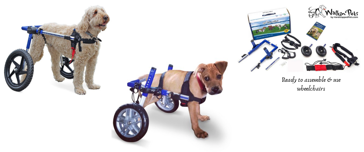 pet therapy wheelchair India