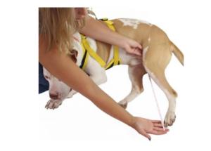 measure dog leg guide