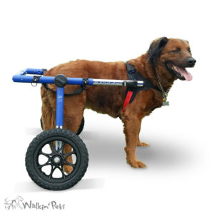 dog wheelchair India