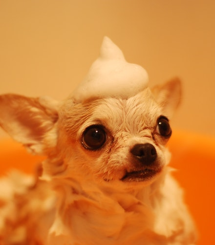 dog at groomers salon