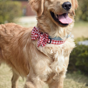 Red check bow tie for dogs