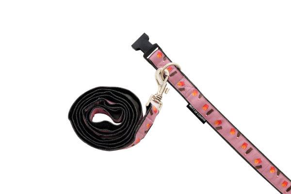 purple dog leash and collar