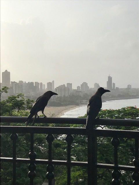 crows at Mumbai hanging garden