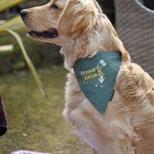 canine fashions