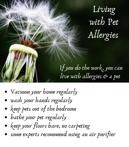 Pet allergy tips to live with a pet