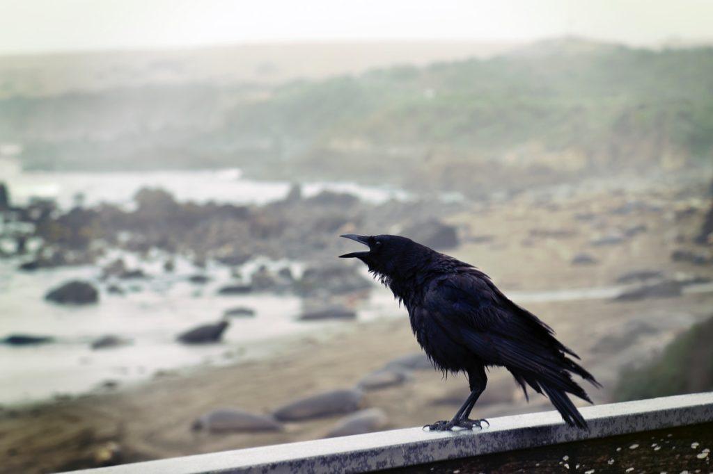 crow on a wall