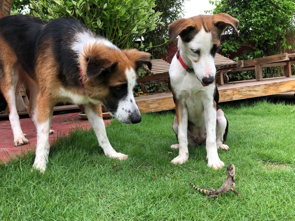 dogs and gecko