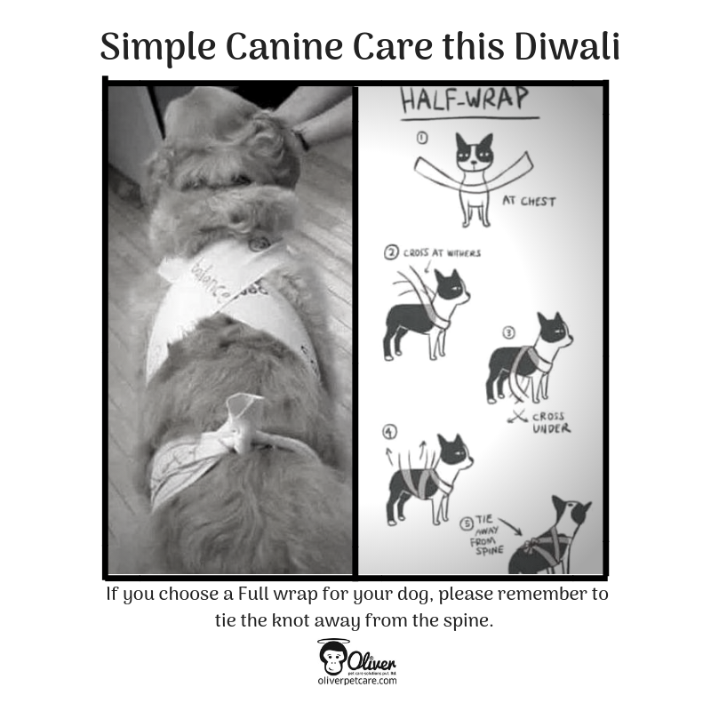 Keep my dog calm this Diwali with an anxiety wrap