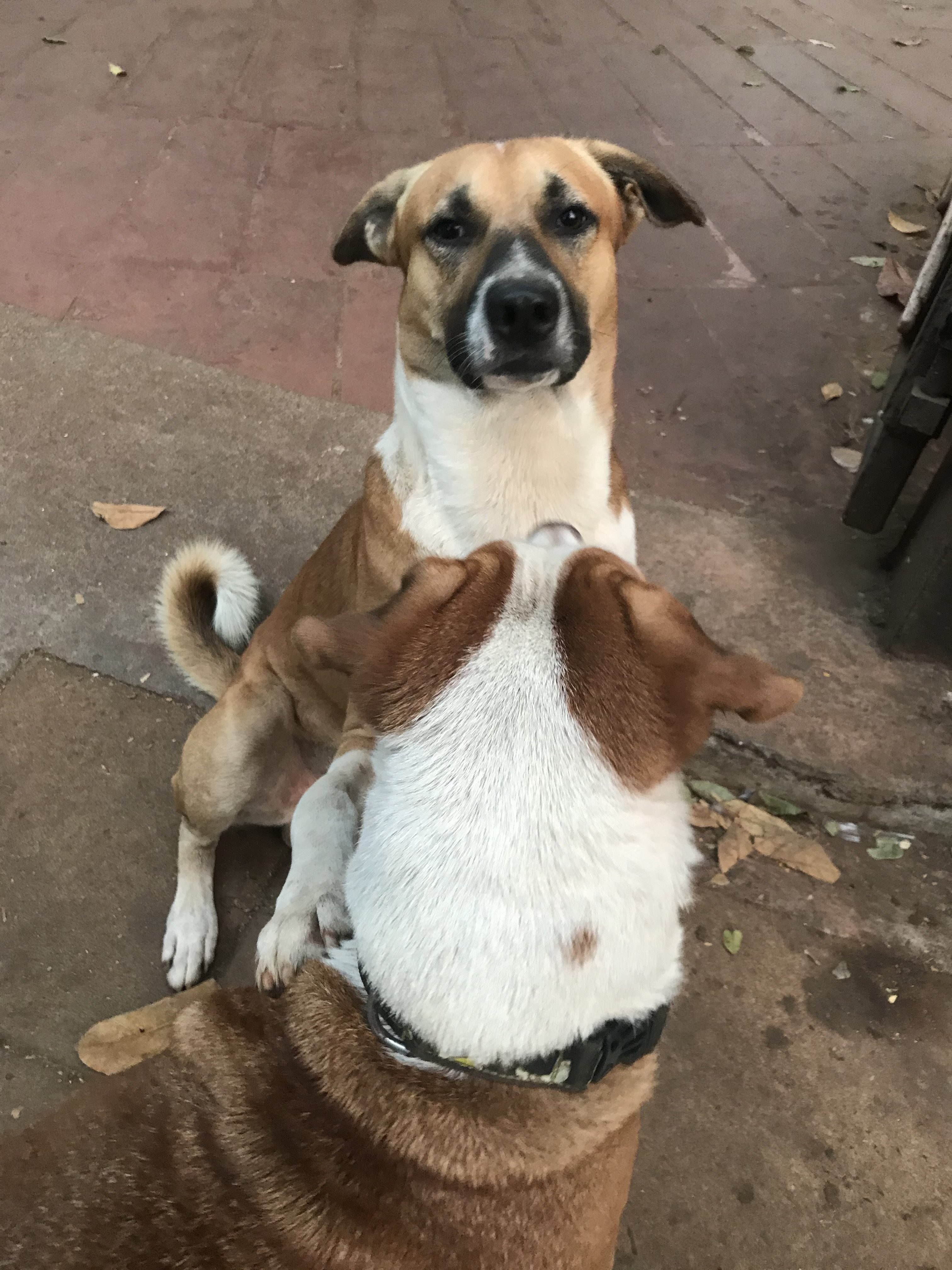 street dogs making friends