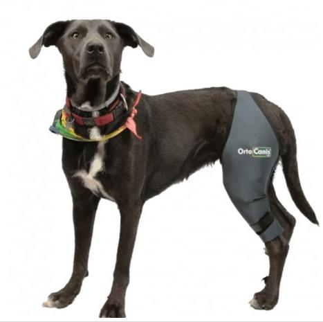 dog knee brace India