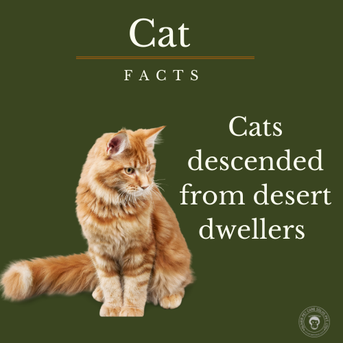 Cat facts on the go