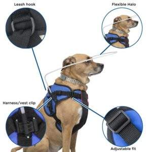 harness for blind dog