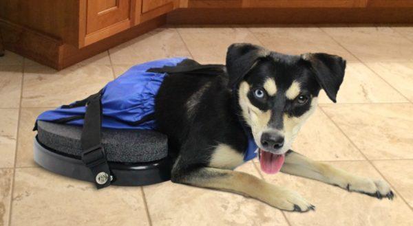paraplegic dog wheels