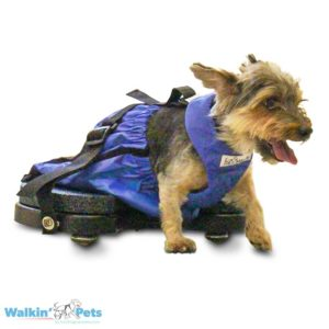 wheels for handicapped dogs