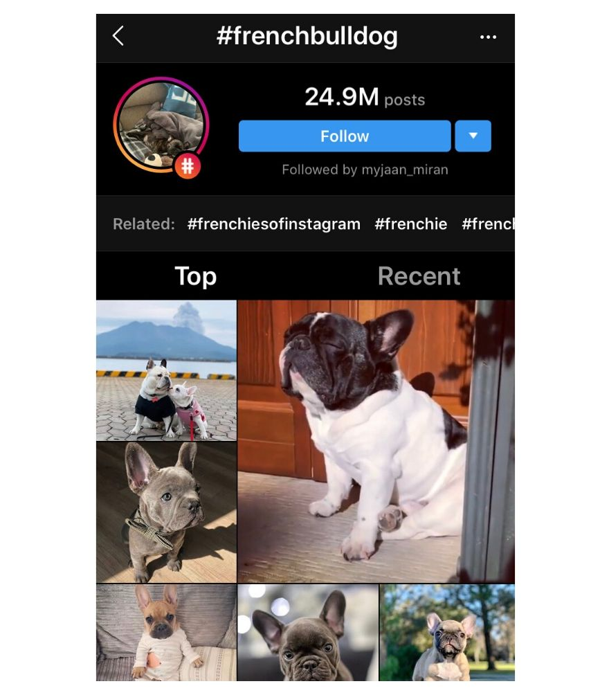 French Bull dogs on Instagram