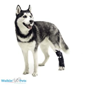 husky dog knuckle sock