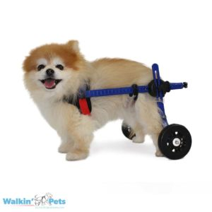 wheelchair for puppy online India