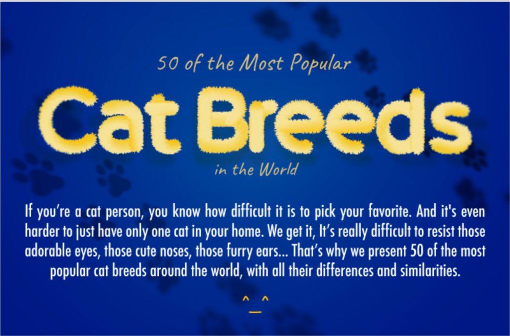50 Most popular cat breeds