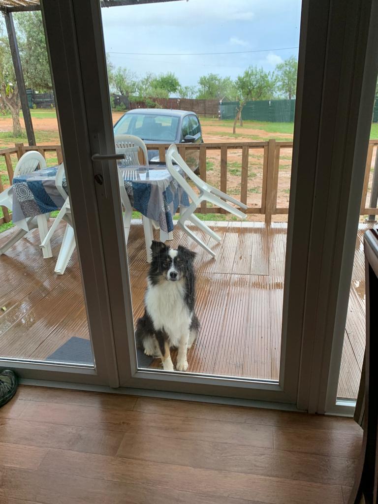 pets in lock down