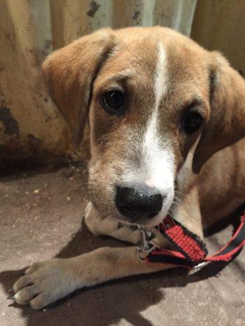 indie puppy rescue