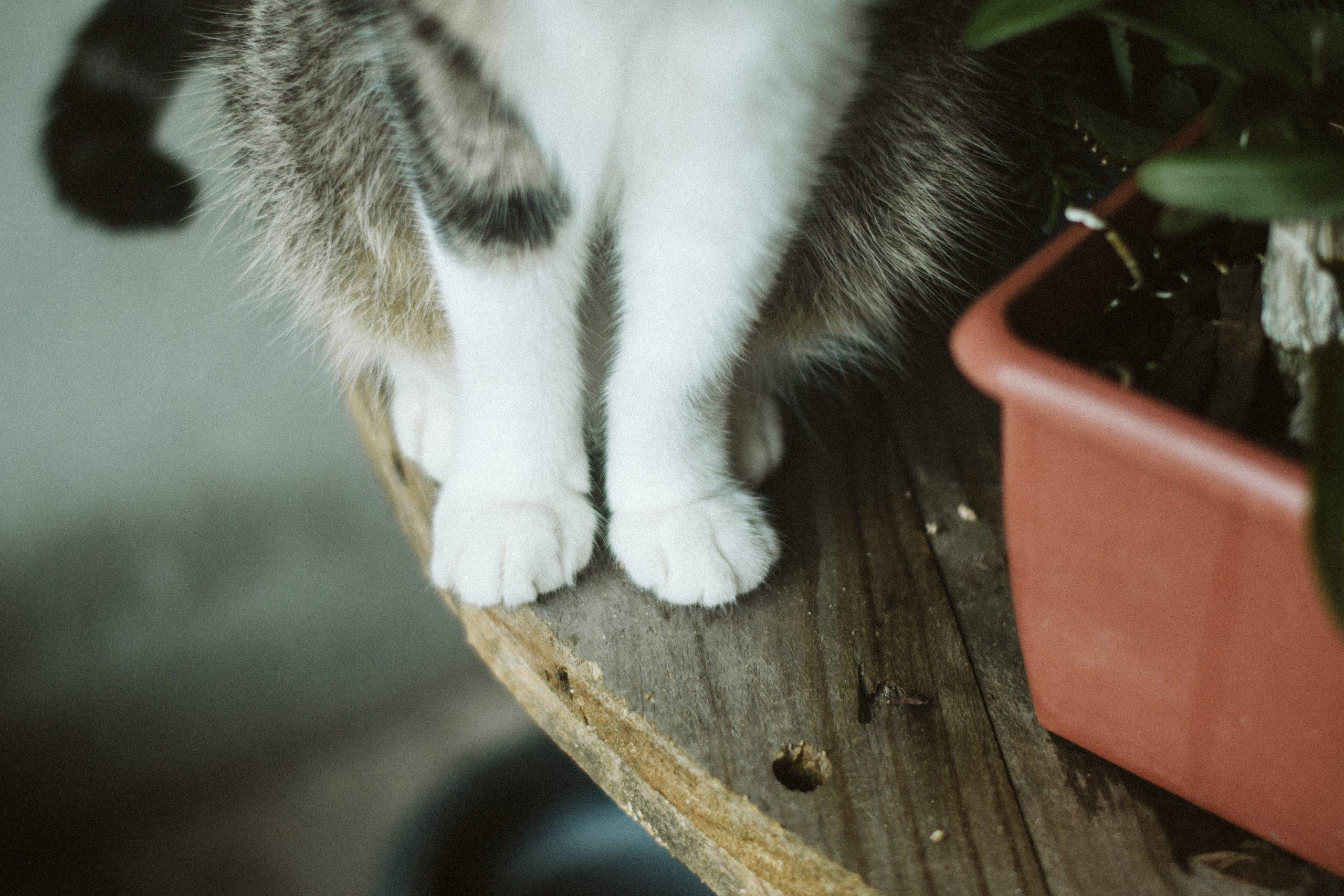cats paws anatomy