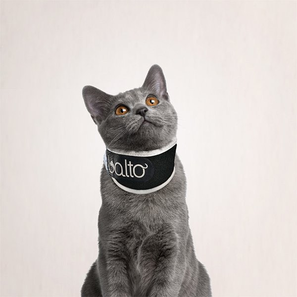 cat with a no lick collar