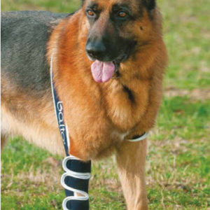 shoulder stabiliser for dogs