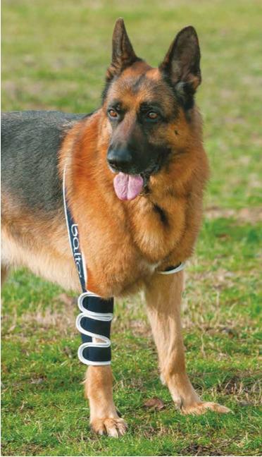 shoulder stabiliser for dogs