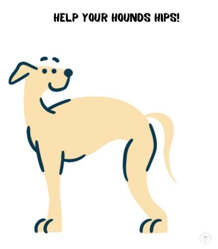 dog hip problems