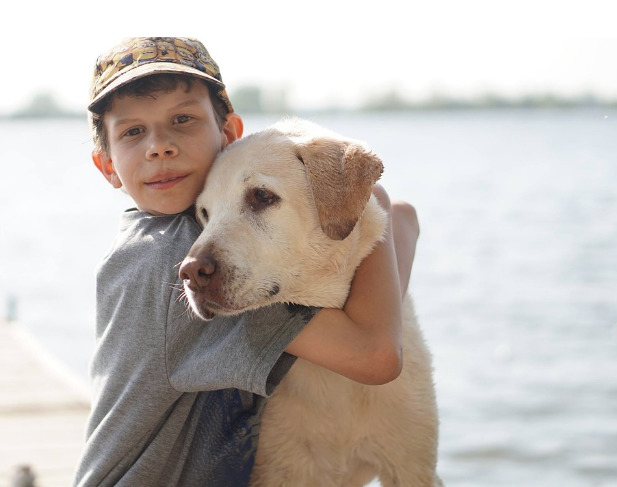Labrador and child