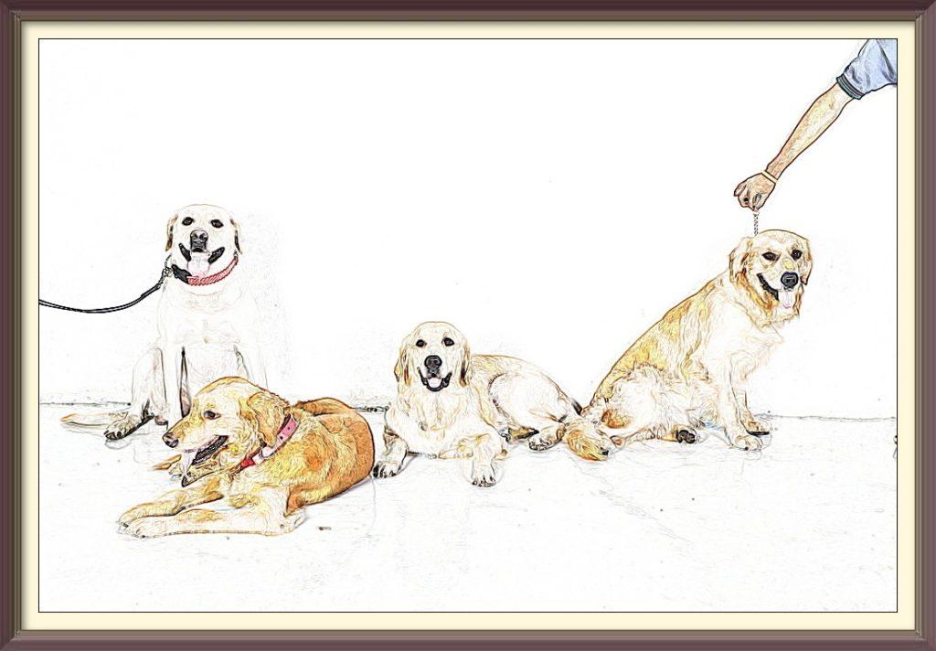 golden retriever dogs online