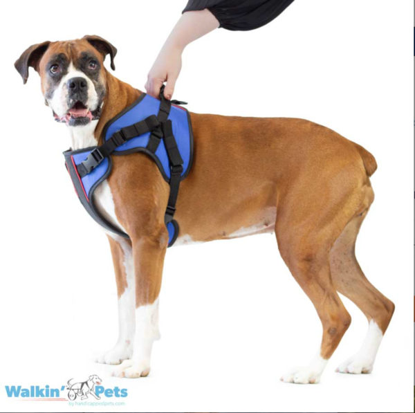 front lift harness for dogs