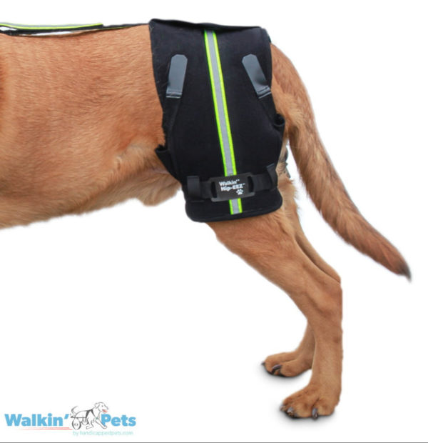 device for canine stability